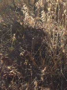 A camouflaged rattlesnake.